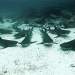 Bucear en las Galápagos