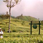 Datos interesantes sobre Sri Lanka Té Lipton