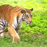 excursiones de vida silvestre ecológica