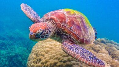 Photo of 8 de los mejores sitios de buceo en la Gran Barrera de Coral