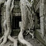 imagen de la hoja de angkor wat