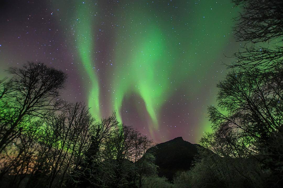 Persiguiendo la aurora boreal en los nuevos árboles de Tromso