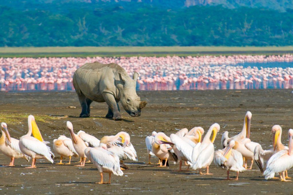 Países para la observación de fauna rara - rinoceronte kenya
