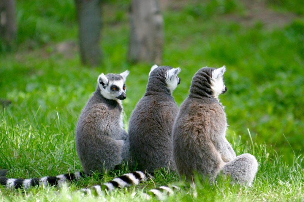 eco-friendly wildlife tours lemurs madagascar