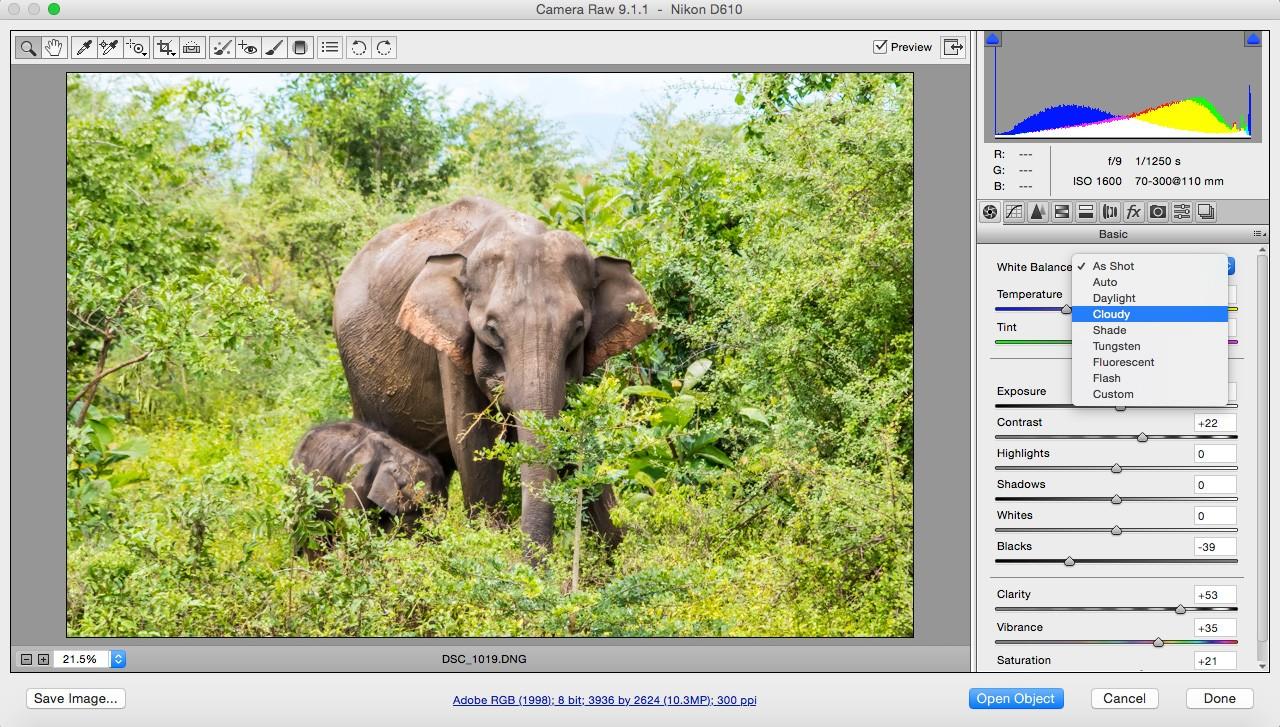 Safari-fotografía-tips-white-balance