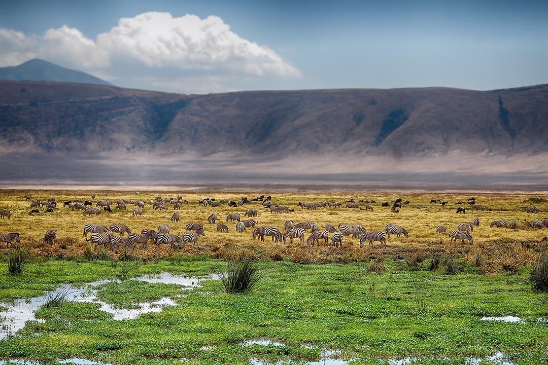 Consejos para la fotografía de safari - toma amplia