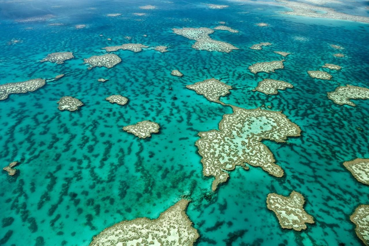 paisajes afectados por el cambio climático - barrera de coral