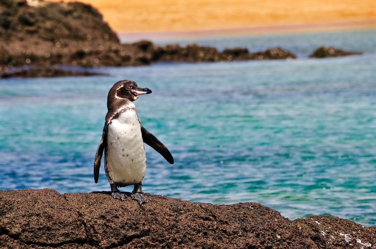 paisajes-afectados-por-cambio-climático-galápagos