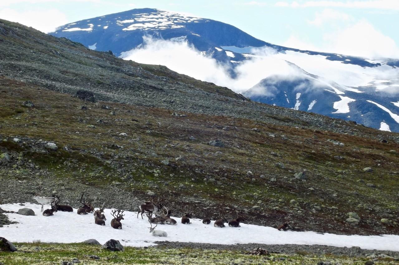 mejor-país-por-excursión-noruega-1