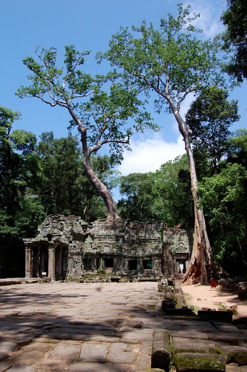 el mejor momento para visitar Angkor Wat: Ta Prohm