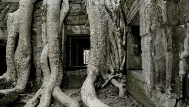 Photo of El mejor momento para visitar Angkor Wat es ahora mismo