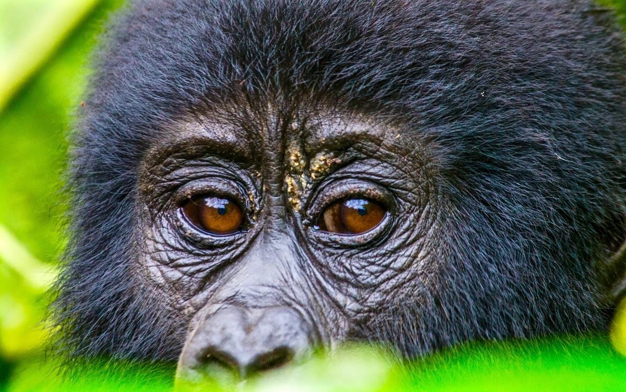 paisajes afectados por el cambio climático-uganda