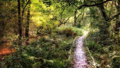 Photo of Las 12 mejores excursiones en el Parque Nacional de los Moros de North York