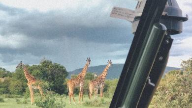Photo of Un día de safari en África oriental: qué esperar