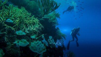 Photo of Buceo de pared en las Islas Turcas y Caicos: un vistazo al abismo