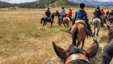 Photo of Llanero solitario: montar a caballo en Montenegro