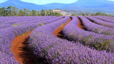 Photo of Las 10 mejores cosas para hacer en Tasmania en verano