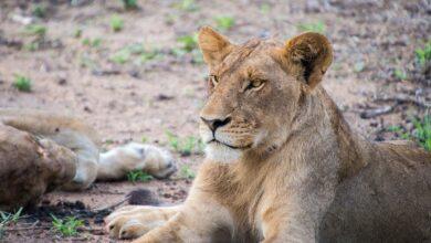 Photo of El Parque Nacional Kruger contra las reservas privadas de caza en Sudáfrica