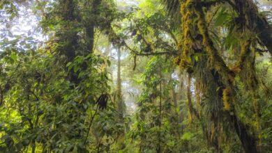 Photo of El Bosque Nuboso de Santa Elena: una caminata de cuento de hadas en Costa Rica