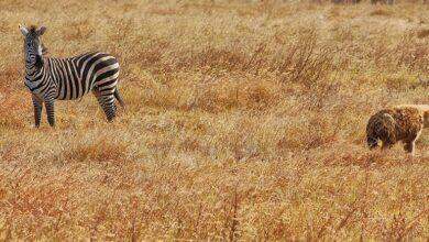 Photo of Consejos de fotografía de safari: cómo fotografiar la vida salvaje (con una cámara)