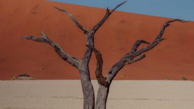 Photo of Cómo planificar un viaje a Namibia: todo lo que necesita saber