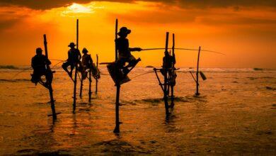 Photo of 20 datos interesantes sobre Sri Lanka