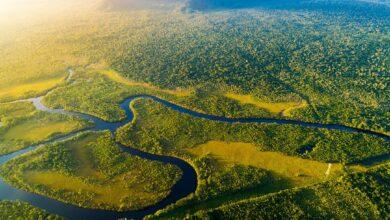 Photo of 12 bosques tropicales más grandes del mundo y dónde encontrarlos