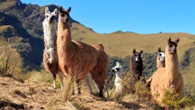 Photo of 19 datos interesantes sobre Ecuador