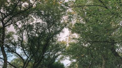 Photo of Una guía de Central Park: ¡Todo lo que no puede perderse en Central Park!
