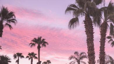Photo of Tu guía de verano en Palm Springs