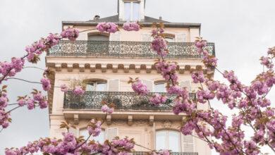 Photo of Dónde encontrar las mejores flores de cerezo en París