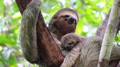 Photo of Buscando perezosos en el Parque Nacional Manuel Antonio, Costa Rica